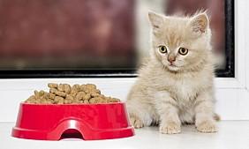 Hrana/mancare uscata pentru pisicute de la 1 pana la 12 luni de la Cauris Grup in Chisinau, la preturi accesibile de la baza angro pe strada Burebista 5.