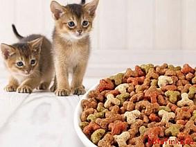 De ce hrana uscata pentru pisici de la PetDiet?